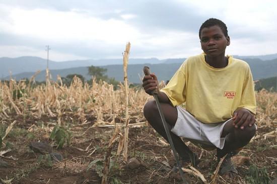 (c) USAID AFRICA BUREAU